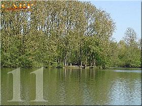 Horse lake: Stek 11, 1 visser
